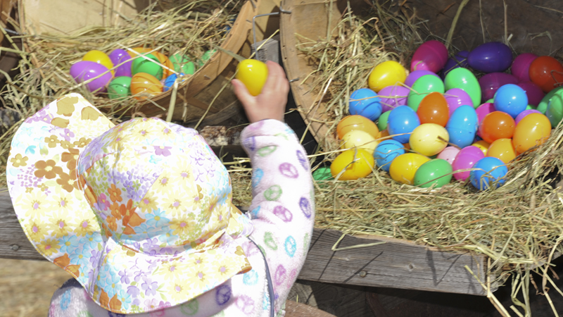 Egg Citing Egg Hunt