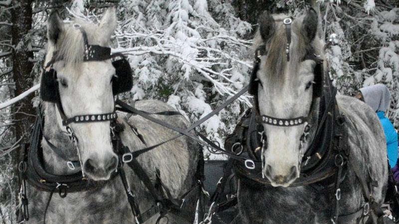 Valentine's Ride